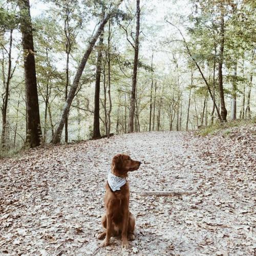 Tunica Hills Pet Friendly