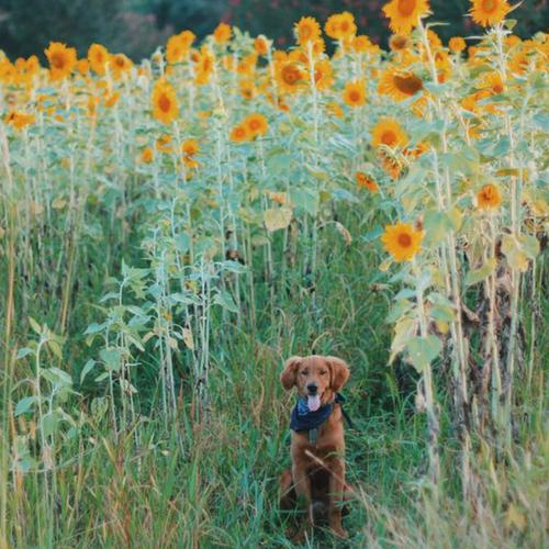 Rural Life Dog Friendly