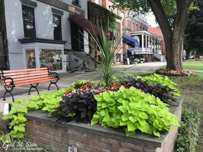 Flower bed with bright green plants along Broadway