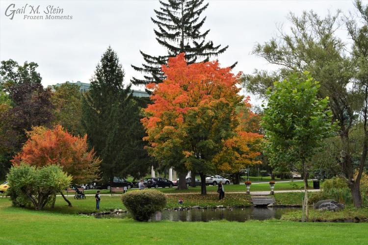 Congress Park foliage