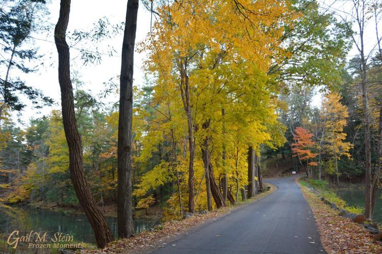 Road leaving Yaddo