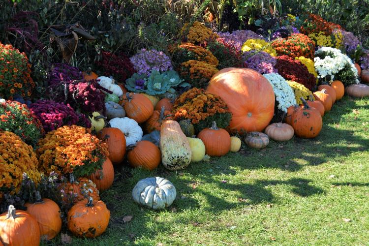 View of pumpkins and flowers