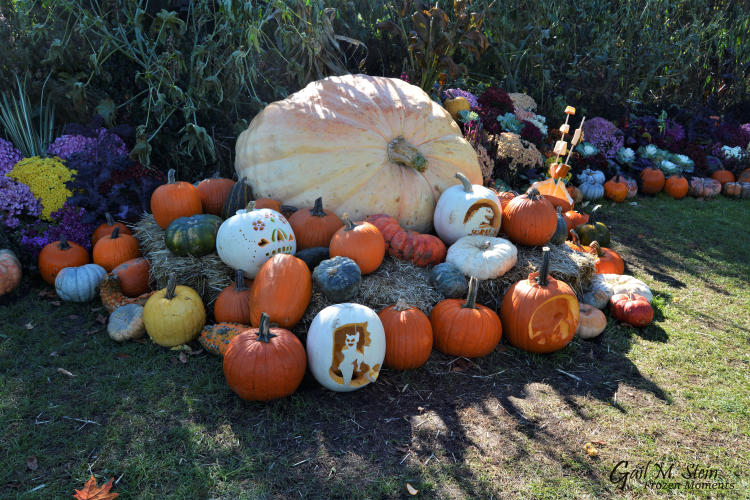 Large white pumpkin and jol's