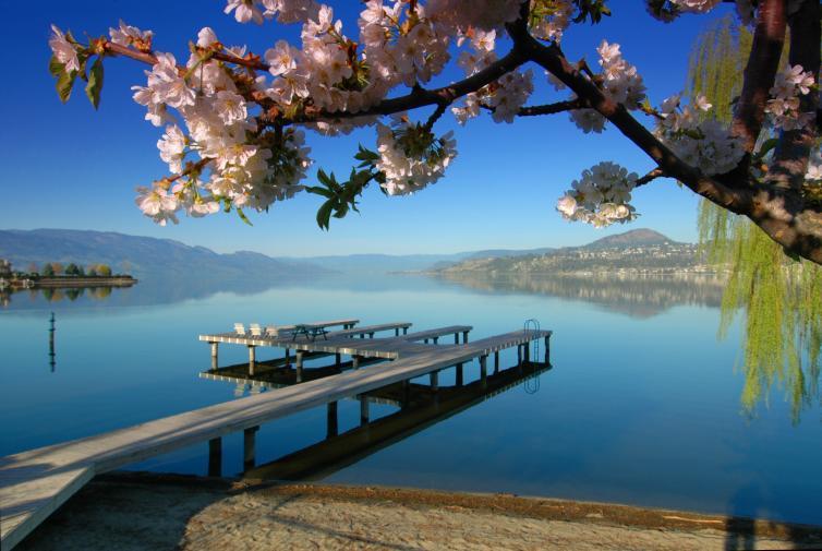 Lakeside dock blossoms