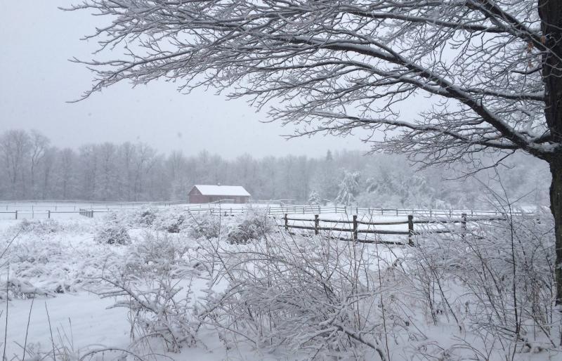 mountain-horse-farm-naples-winter-scenic