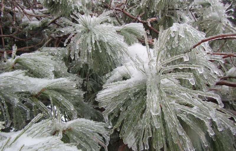 cindy-harris-winter-ice-tree-scenic