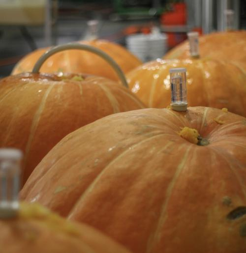 the-southern-brewing-company-pumpkin