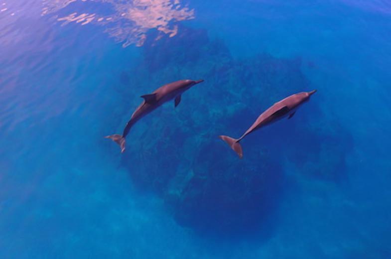 Blue Ocean Sports Club Water