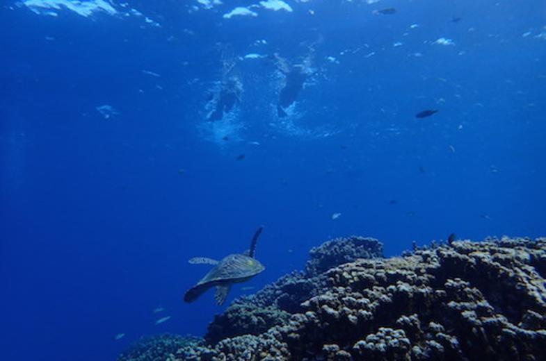 Blue Ocean Sports Club Diving
