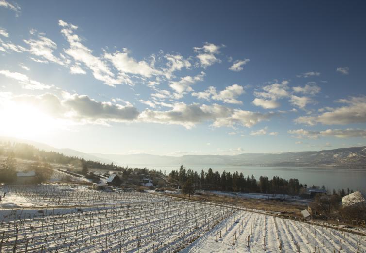 Summerhill Winter View