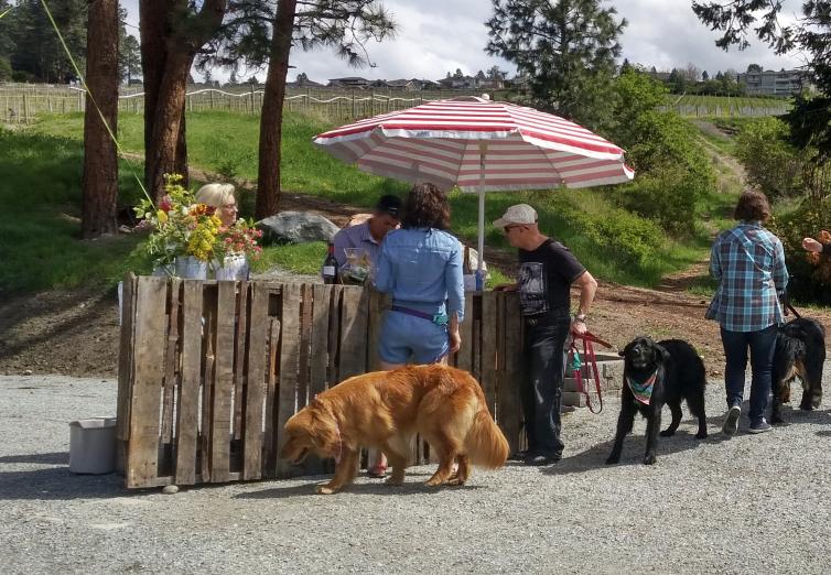 St. Hubertus Winery Dog Friendly