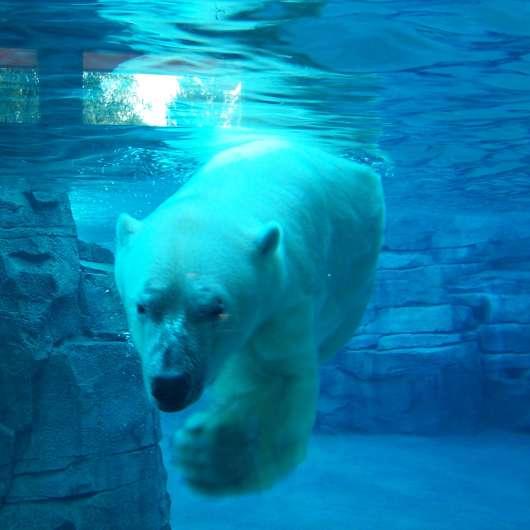 Kansas City Zoo