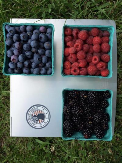 Oregon Trail Farm Berry Picking Baskets - Leavenworth, KS