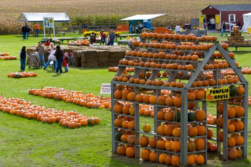 pick-n-patch-stanley-pumpkins.jpg