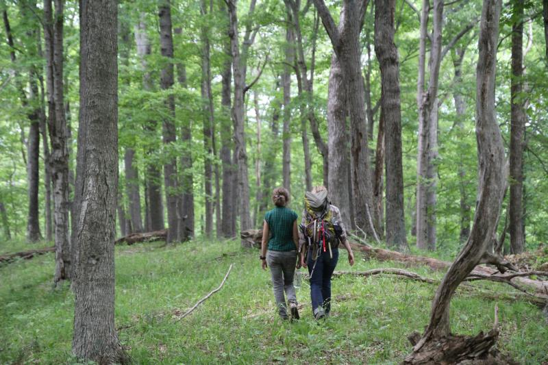 Hikers in Hoosier National Forest