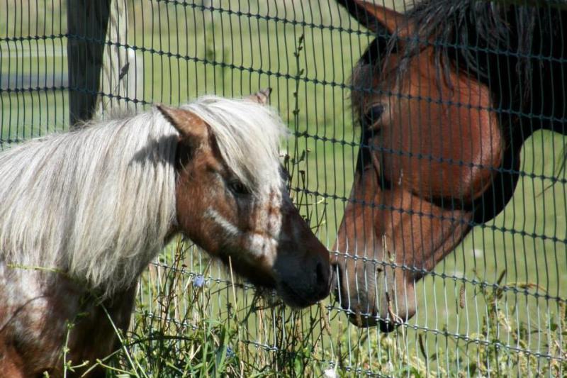mountain-horse-farm-naples-exterior-horse-experience