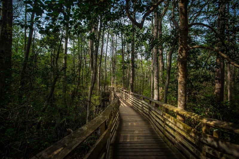 Outdoors - Parks - First Landing State Park - A22A7755.jpg