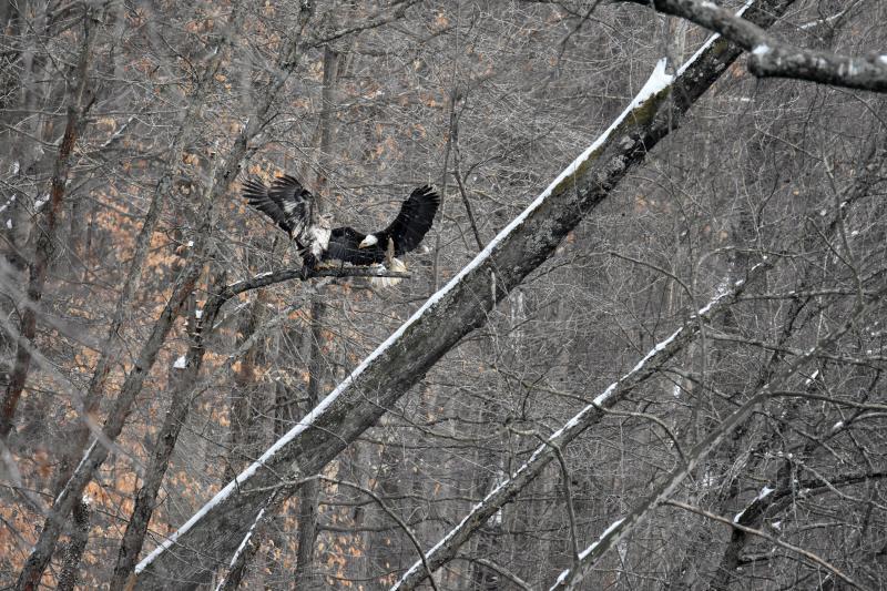 eagles over monroe