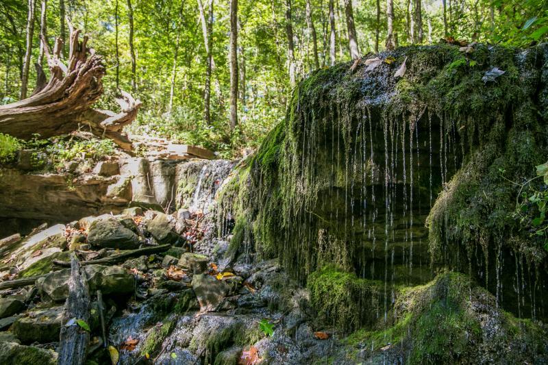 leonard springs