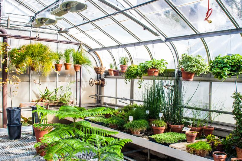 iu greenhouse