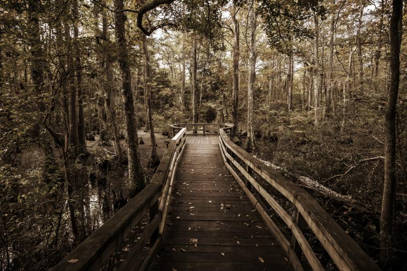 Virginia Beach's First Landing State Park in the Fall