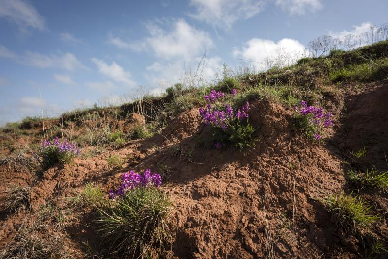 Wildflowers in Gypsum Hills