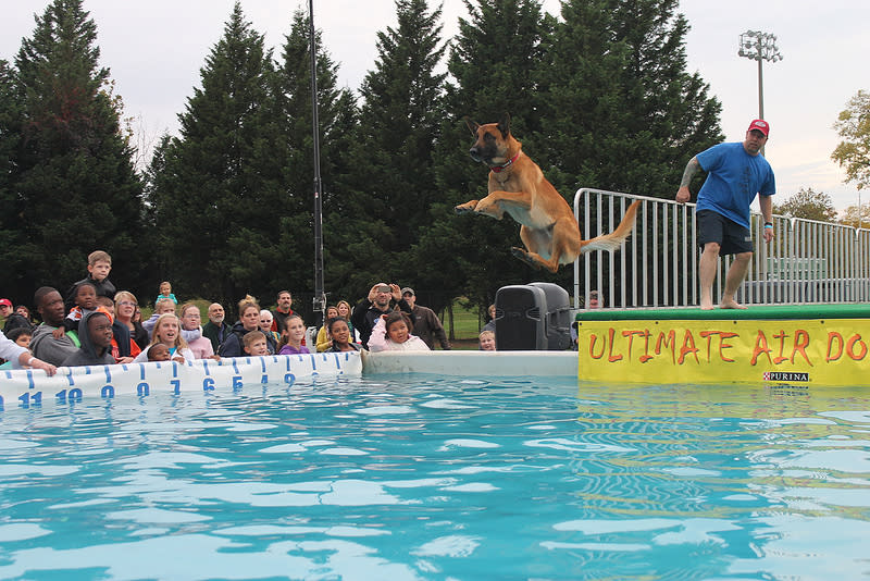 Dog Jumping at GO Outside Festival