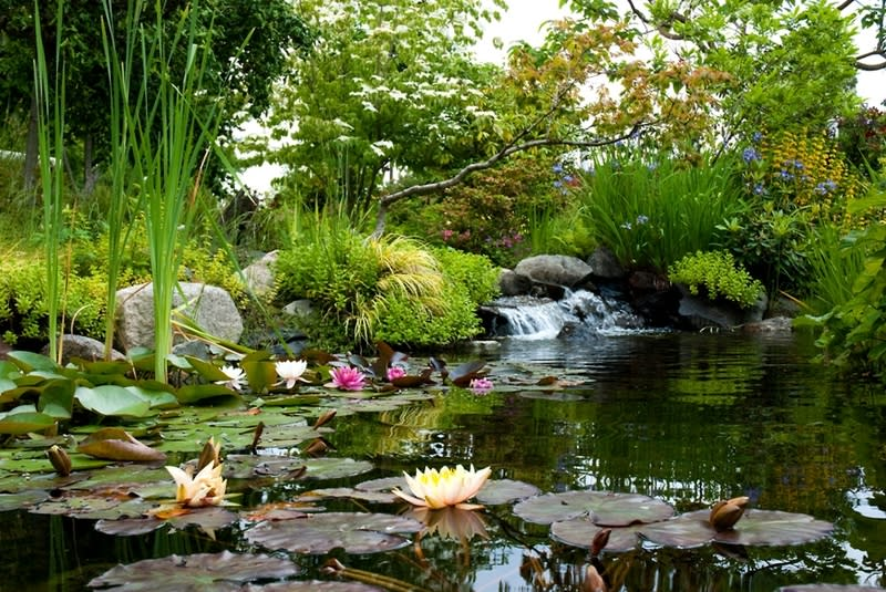 Summer Sip in the Garden Botanical Garden