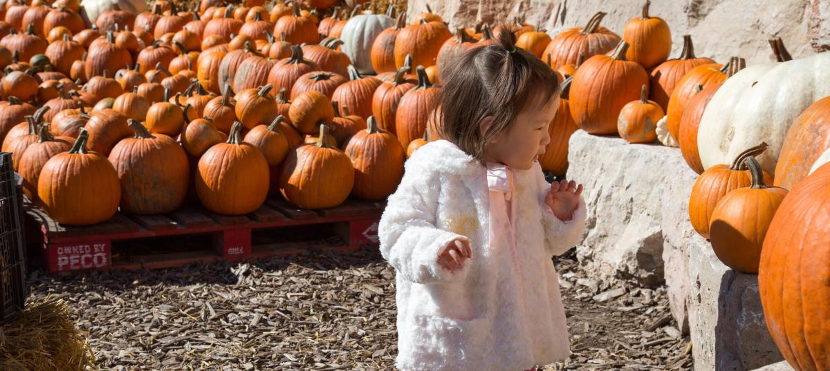 Lincoln Park Zoo Fall Fest