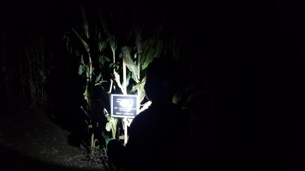 Visitors navigate the Greendell Landscape Solutions Corn Maze by moonlight.