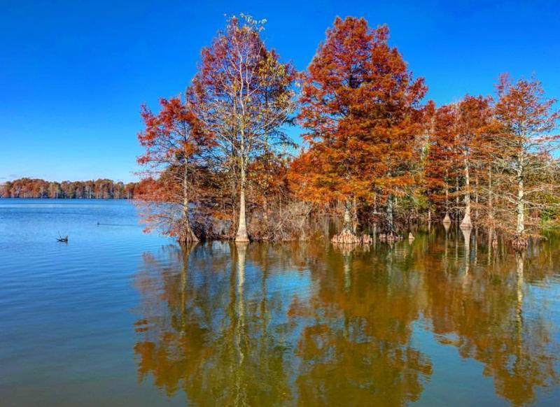 Stumpy Lake