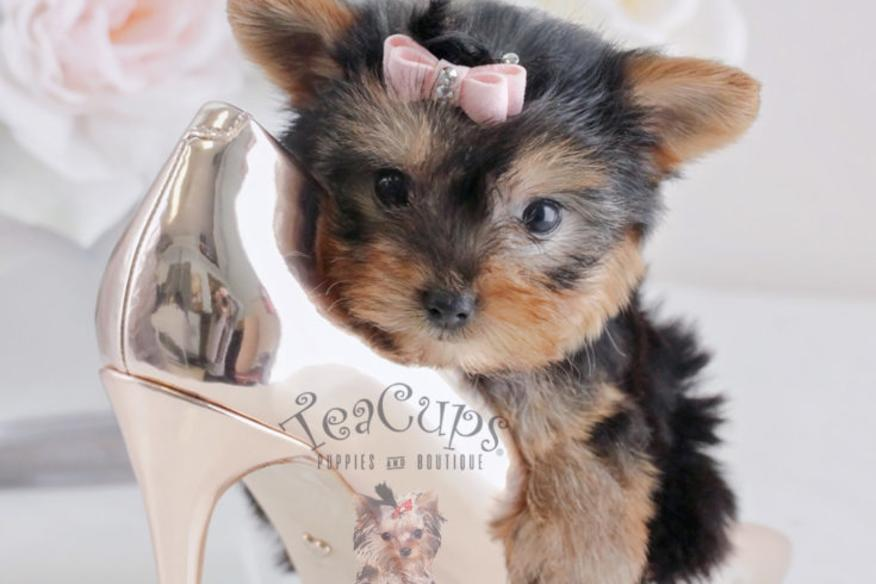 tea cups puppies and boutique