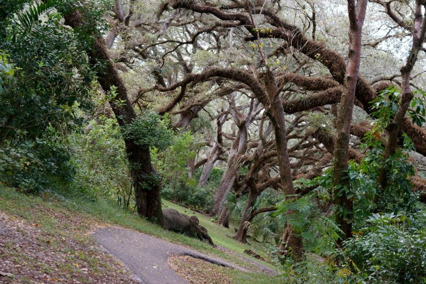 treetops1