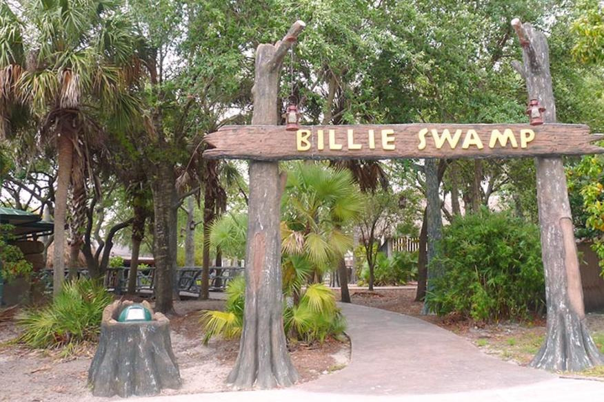 Welcome to Billie Swamp Safari