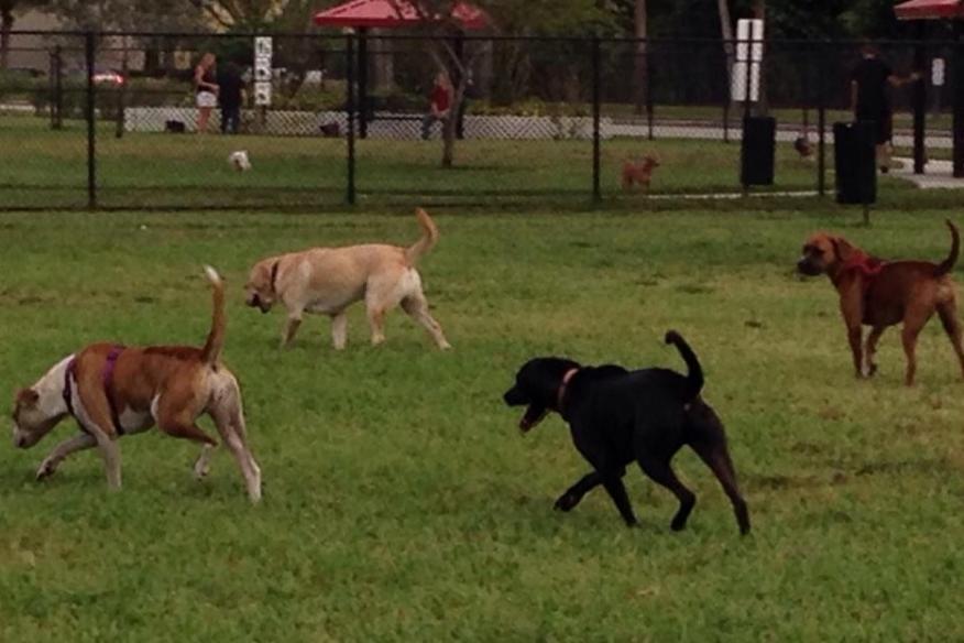 Big Dogs of Tamarac
