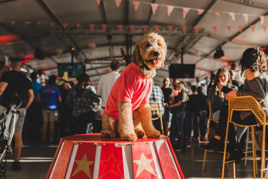 Wharf - Valentines Doggie
