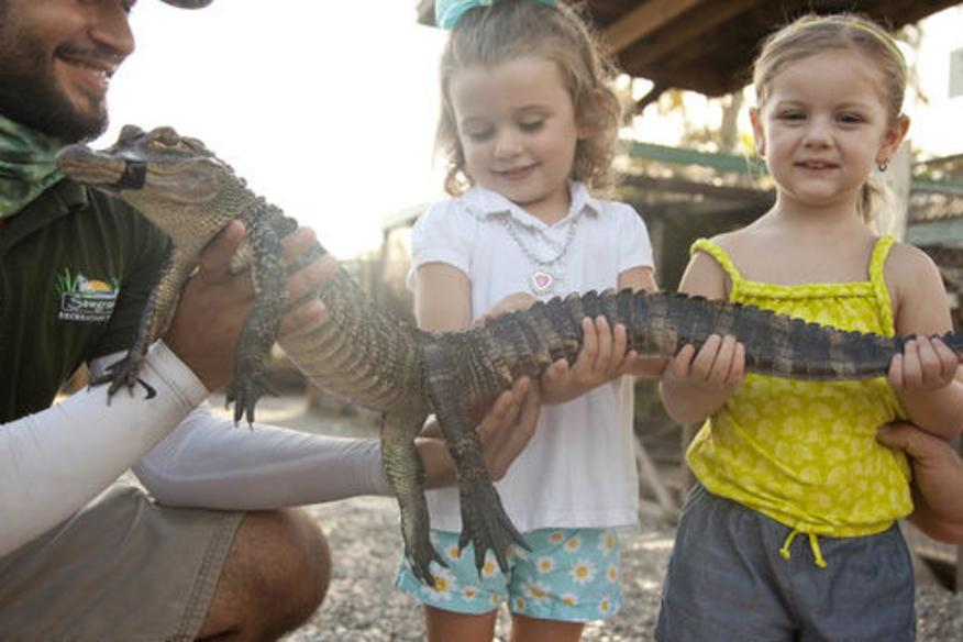 Hold A Baby Gator Experience