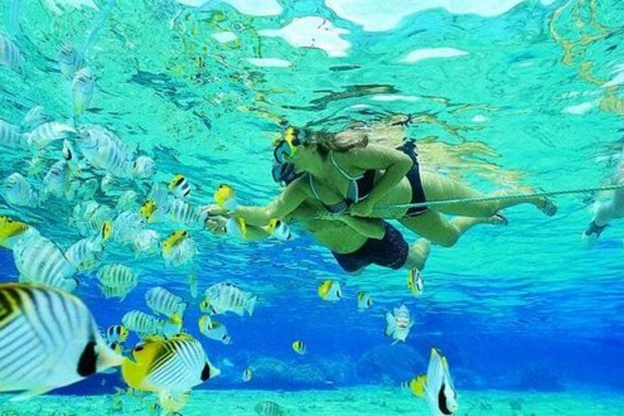 People Diving And Colorful Fish