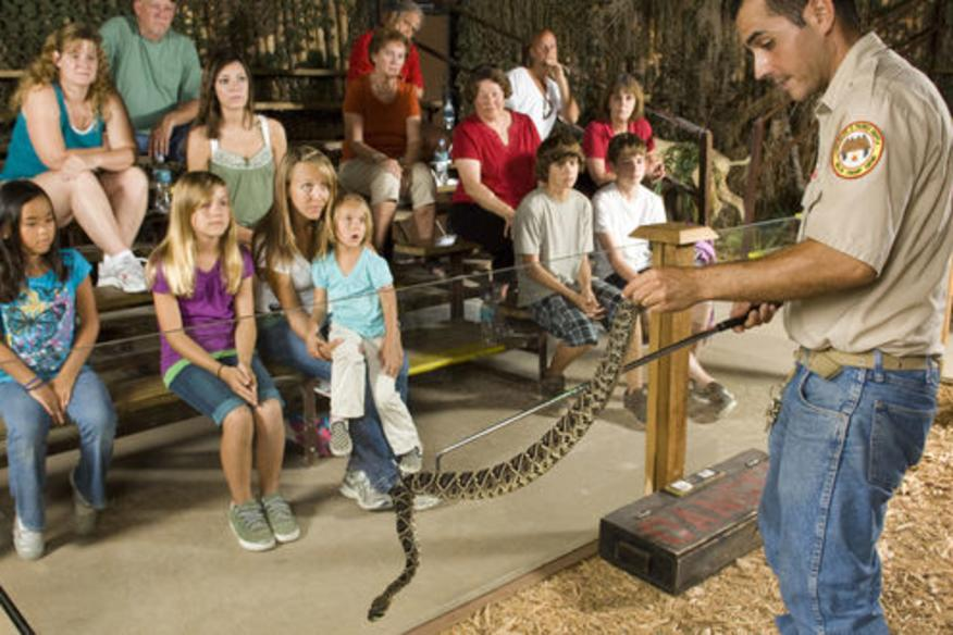 Venomous Snake Show