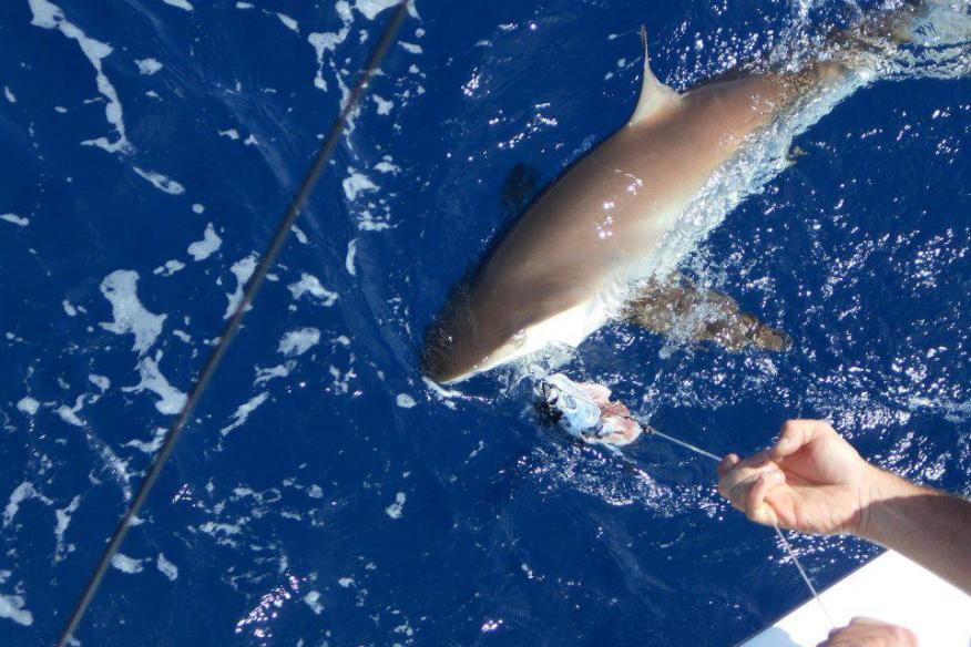 topshotfishing
