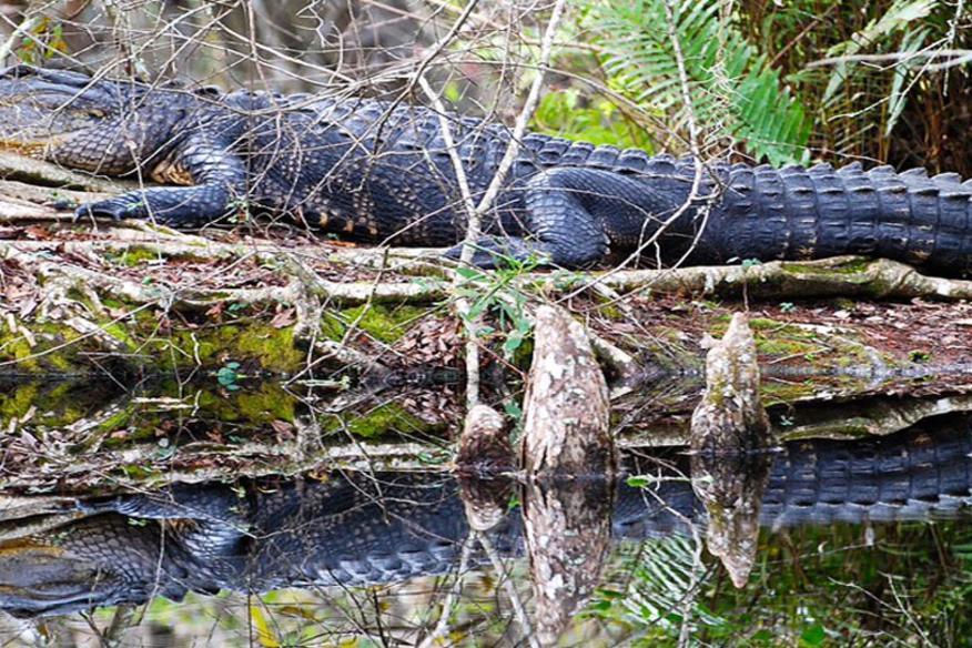 evergladeswamp32