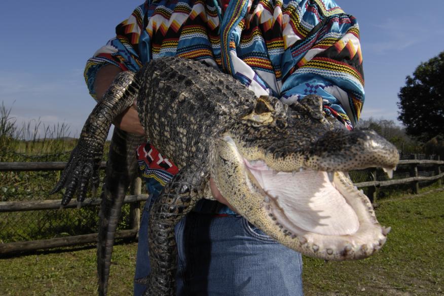alligatorholder