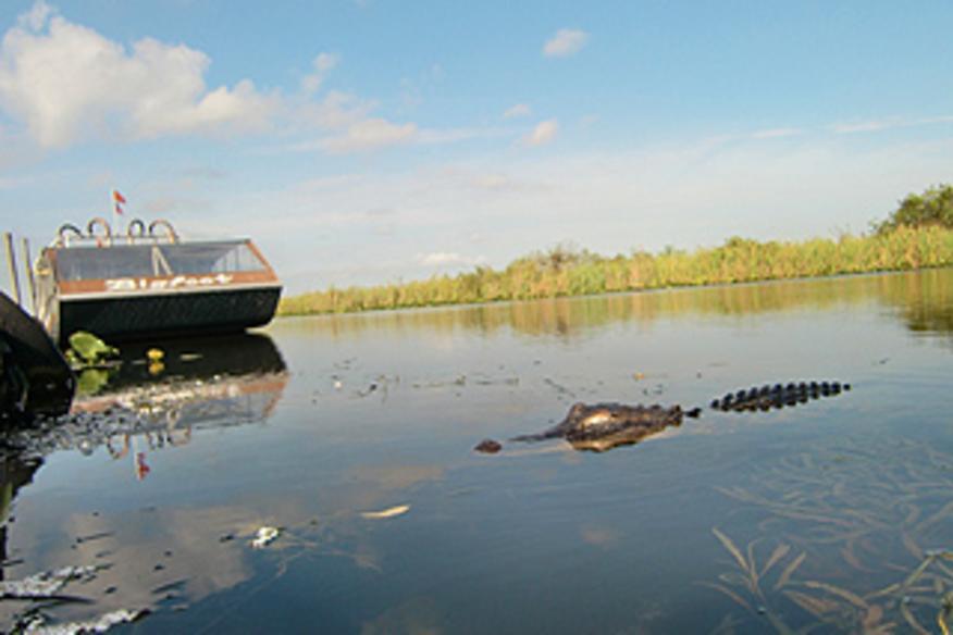 Airboat near Gator