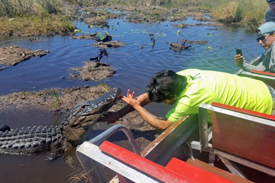 Get up close with WILD gators!