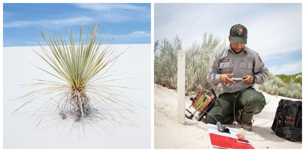 White Sands Collage 02