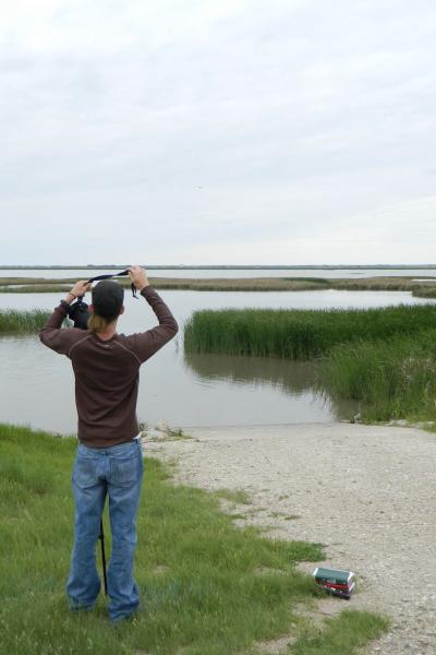 Joe Brewer Birding
