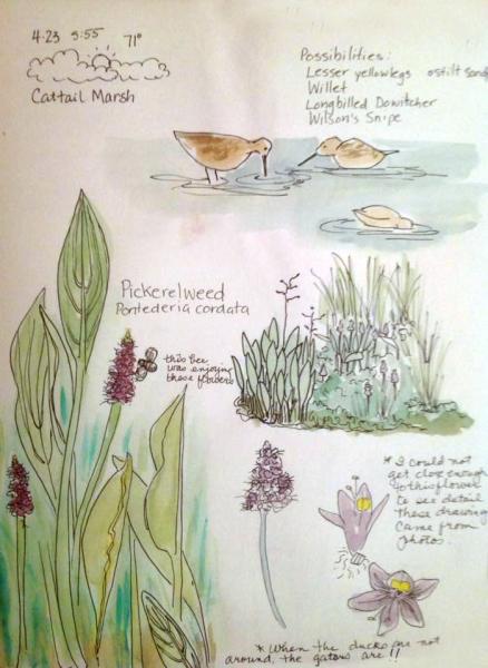 Cattail Marsh Nature Journaling