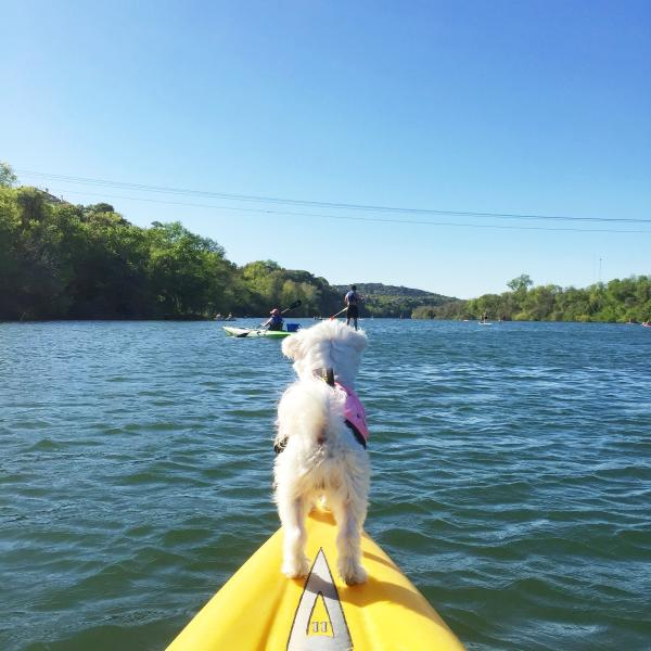 Small dog on the end of a paddle board on Lady Bird Lake