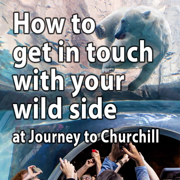 How to get in touch with your wild side at Journey to Churchill