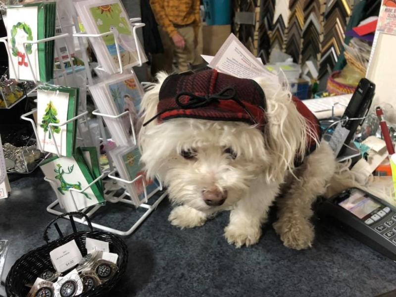 Absolute Gallery Stormy Kromer dog hat